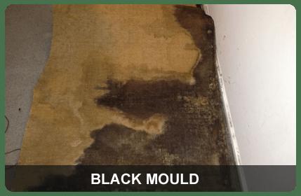 Black mould