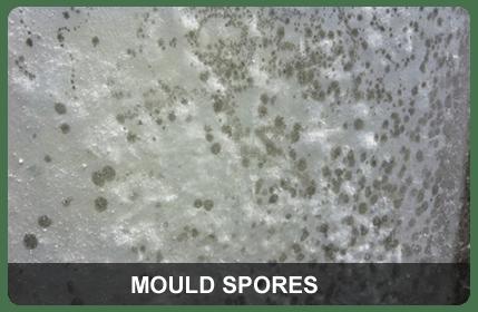 Mould Spores